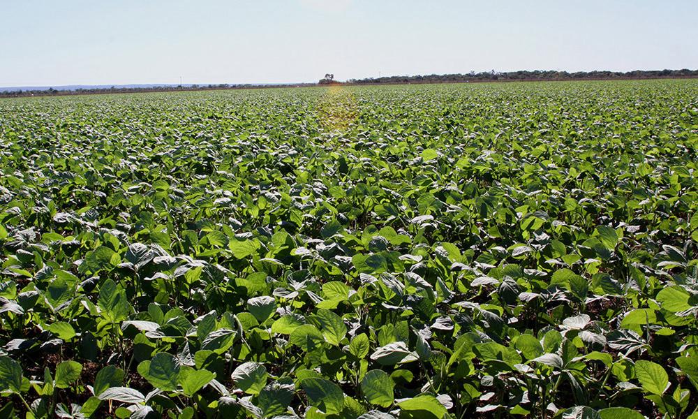 Tocantins teve um aumento expressivo na sua área plantada, saltando de 600 mil hectares, em 2010, para um 1,6 milhão de hectares, em 2020 (Foto: Secom/TO)
