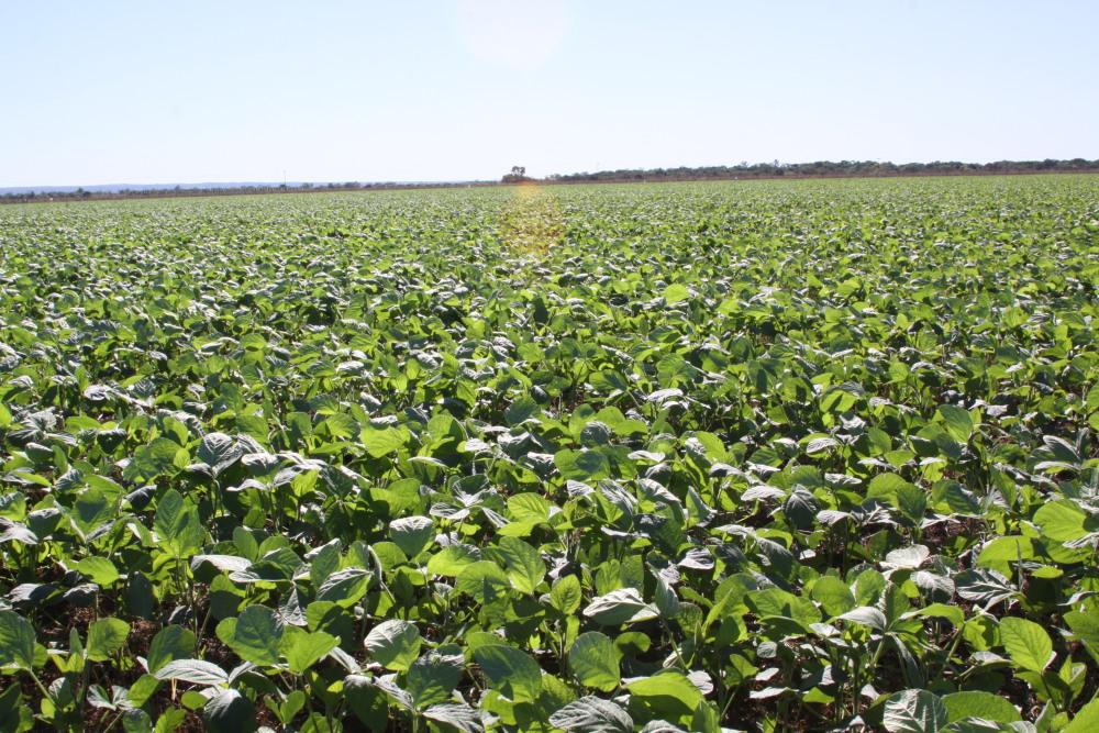 Janela de plantio da soja sequeiro encerra no próximo dia 15 (Foto: Divulgação)